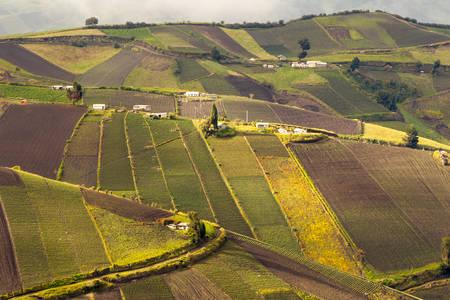 rural development: high altitude farming in ecuadorian andes, about 4000m altitude, chimborazo county Stock Photo