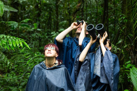 adventurers: Group of tourist looking for animals into the jungle, rain ponchos and powerfull binoculars are a must