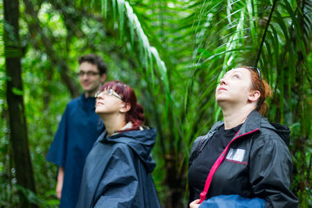 adventurers: Group of tourists in Ecuadorian jungle looking for animals in Cuyabeno Wildlife Reserve, Sucumbios Ecuador Stock Photo