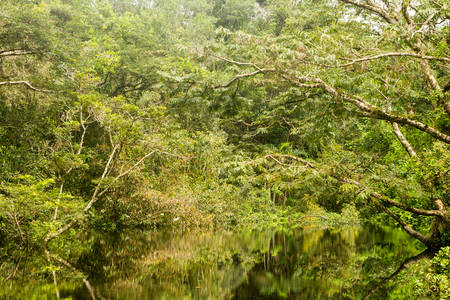 ecuadorian: Typical Amazonian vegetation in Ecuadorian primary jungle Stock Photo