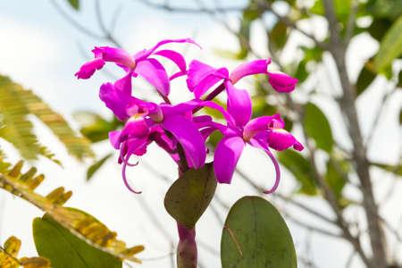 impenetrable: Purple orchid in Ecuadorian Amazonian jungle Stock Photo