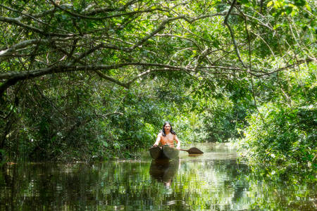 jungle: Indigenous adult man on typical wooden canoe choped from a single tree navigating murky waters of Ecuadorian Amazonian primary jungle
