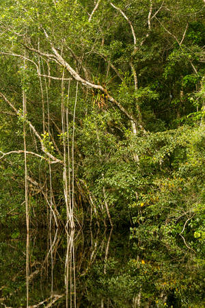 amazonian: Amazonian jungle theme with dense vegetation in bright daylight Stock Photo
