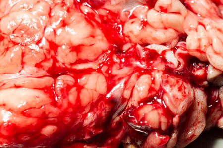 entrails: Detailed view of blood filled cattle organs , slaughterhouse theme