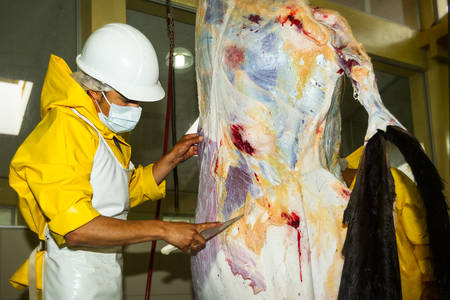 poleas: Carnicero Matadero desollar un ganado, cuchillo se utiliza para ayudar poleas mecánica