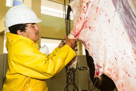 poleas: Trabajador en el ganado de envoltura mataderos ocultar en el poleas desollado mecánico Foto de archivo