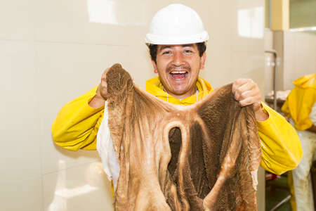 rumen: Happy slaughterhouse butcher posing while holding a cattle rumen organ or stomach Stock Photo