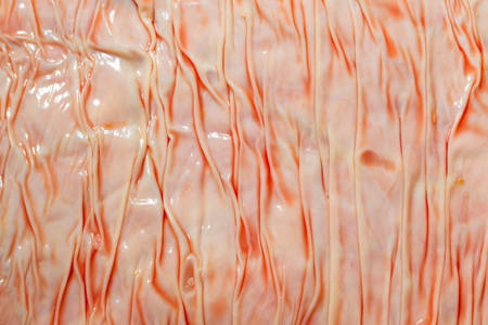 animal vein: Meat industry theme, cattle lungs close up