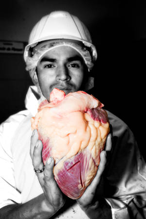 Animal killing theme with slaughterhouse butcher holding a cattle heart in his hands, partially monochrome image
