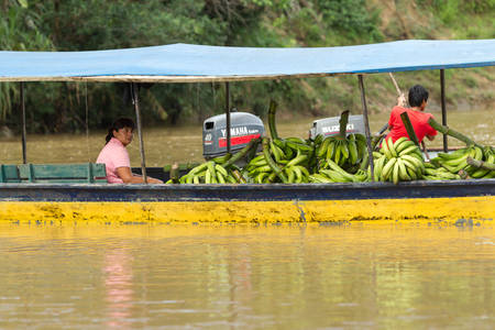 pile engine: Puni Bocana, Ecuador - 23 November 2012: Adult Woman Brings To The Local Market A Pile Of Green Bananas By Boat In Puni Bocana On November 23, 2012