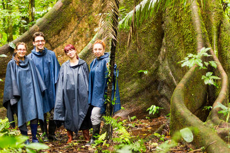 botas: Grupo de cuatro turistas en la selva amazónica contra árbol de lluvia Ponchos enorme Ceiba y botas de goma son una necesidad en este rincón de la naturaleza