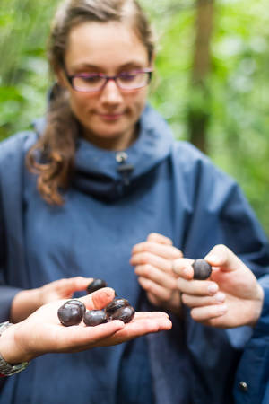 showed: Tourist Woman In Amazonian Primary Jungle Is Showed Tagua Seeds Stock Photo
