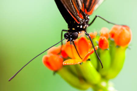 amazonian: Exotic Butterfly Feeding On A Colorful Flower Shot With Ambient Light In Amazonian Forest