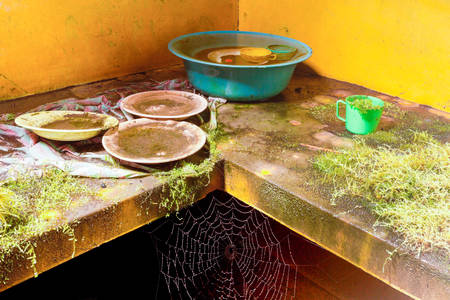lavar platos: Vegetation And Insects Takes Turn In A Abandoned Kitchen