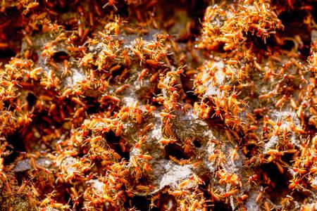 america del sur: Gran colonia de termitas En Cuenca Amazónica Ecuatoriana