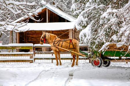 horse drawn: Horse Drawn Cart On Winter Scene