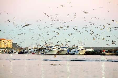 barca da pesca: Fotocamera Porto scena nella luce del tramonto Pescherecci e gabbiani medio Teleobiettivo Sul Treppiedi Montato Archivio Fotografico