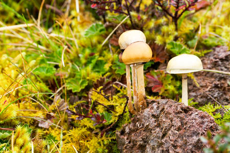 fungous: Wild Mushroom Growing Out Of Wild Animal Feces