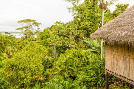 amazonian: Dense Vegetation And Hut In Amazonian Jungle Stock Photo