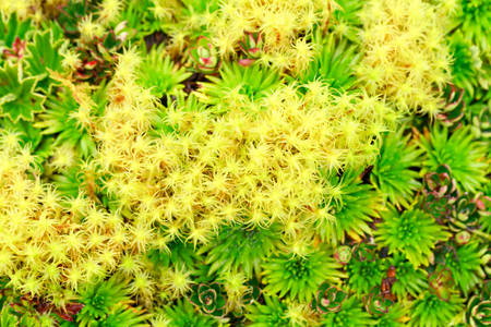 altitude: High Altitude Algae And Mosses Llanganates National Park Ecuador