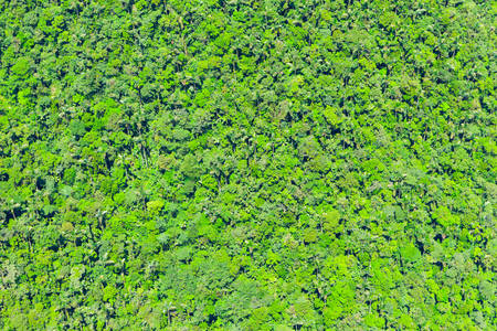 rain forest background: High Altitude Aerial Shot Of A Dense Rainforest Stock Photo
