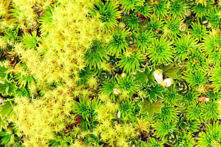 mosses: High Altitude Algae And Mosses Llanganates National Park Ecuador