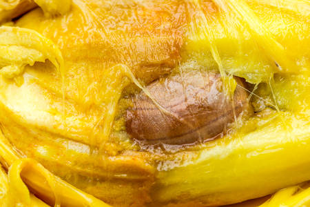 Close Up Shot Of A Breadfruit Pulp Seed In The Center Stock Photo