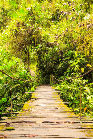 amazonian: Simple Wooden Bridge In Amazonian Forests