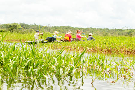 team cooperation: Tourists Fishing Legendary Piranha Fish In Ecuadorian Amazonian Primary Jungle