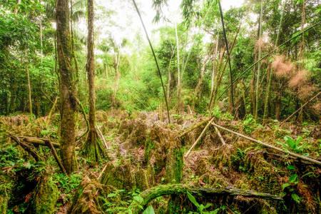amazonian: Natural Labyrinth In Dense Amazonian Rainforest Stock Photo