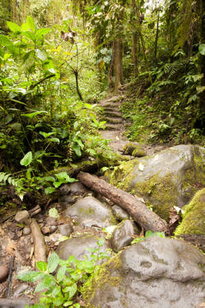 amazon forest: Path In The Amazon Forest