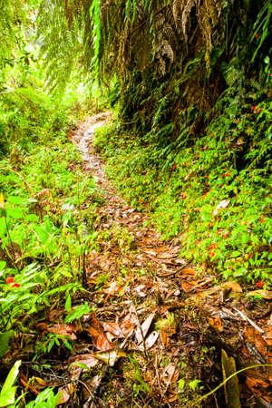precipitacion: Calzada En La selva amazónica Después pesado Precipitación