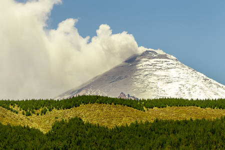 eruption: Cotopaxi Volcano 2015 Eruption Green Pine Forest In The Foreground Stock Photo