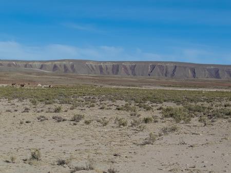 altiplano: Altiplano in Bolivia