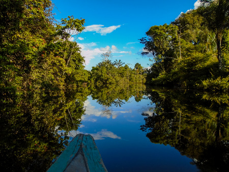 jungle: Amazon river