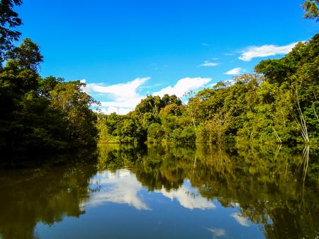 the river: Amazon river