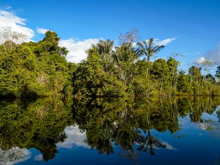 rio amazonas: Río Amazonas Foto de archivo