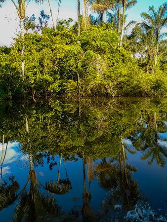 rio amazonas: R�o Amazonas Foto de archivo