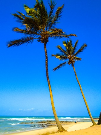 pipa: View at the Pipa beach in Brazil Stock Photo