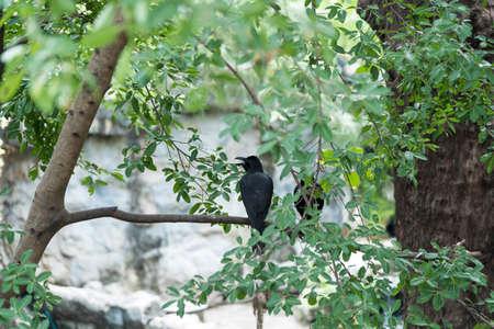 pecker: Corvidae bird in the zoo