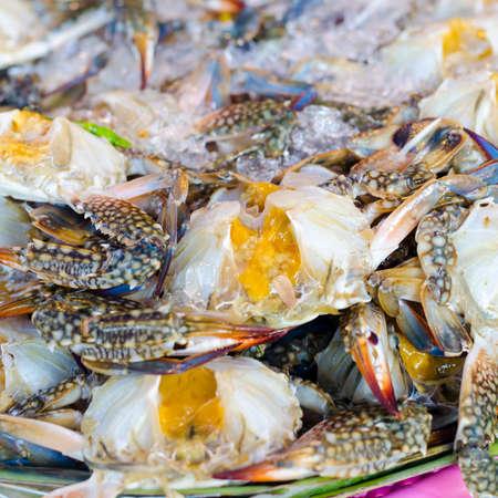 Flower crab, Blue crab, Blue swimmer crab, Blue manna crab, Sand crab, Portunus pelagicus, Portunus