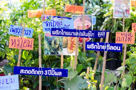 BANGKOK,THAILAND - 30 JANUARY 2017 : selling plant sign at market