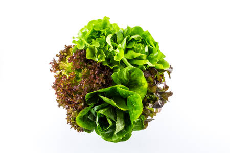 cos: salad isolated on the white background.