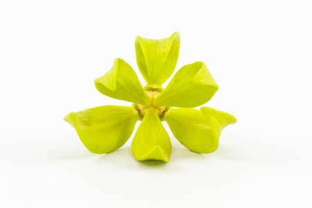 Closeup Ylang-Ylang bloem op wit Stockfoto