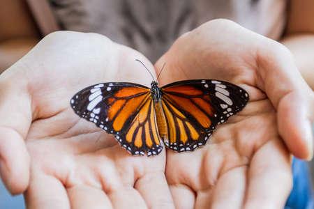 donna farfalla: Donna mano in possesso di una bellissima farfalla isolato su un bianco Archivio Fotografico