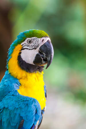 Colorful parrot macaw head close up shot. photo