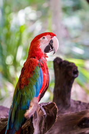Colorful parrot macaw on tree branches. photo