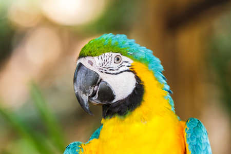 head close up: Colorful parrot macaw head close up shot.  Stock Photo
