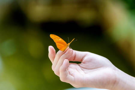 Yellow butterfly with open wings sitting on the girl hand in the greenhouse,Thailand. Foto de archivo