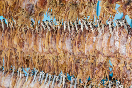 Dried squid hang on the line  for sale in market,THailand. photo